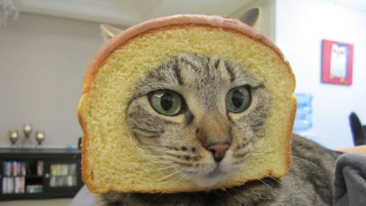 524efd7920cb4d70fedf0df807be8673