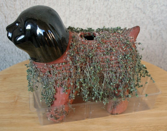 Growing Chia Seeds on a Figurine