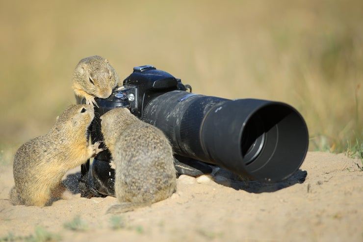 Squirrels checking out a camera