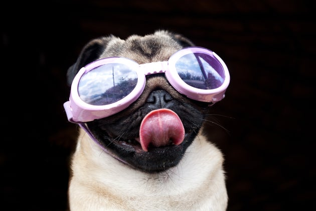 Inventing Dog Goggles