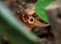 The Incredible Story of Africa's Lost-and-Found Elephant Shrew