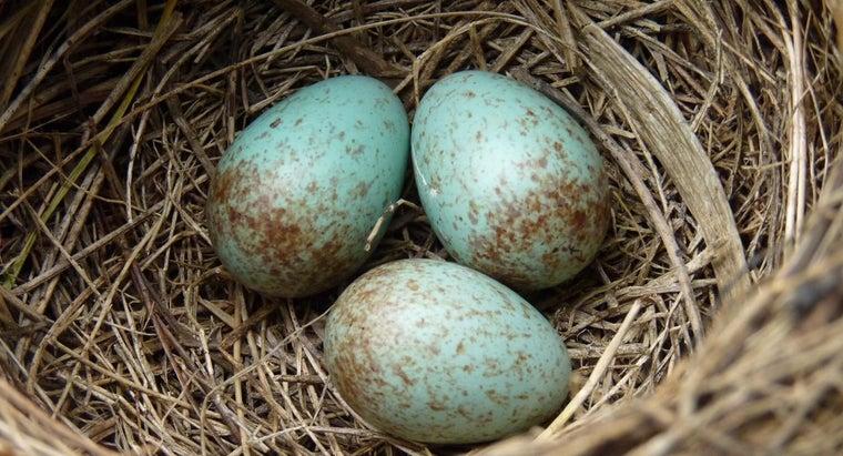 advantages-amniotic-egg