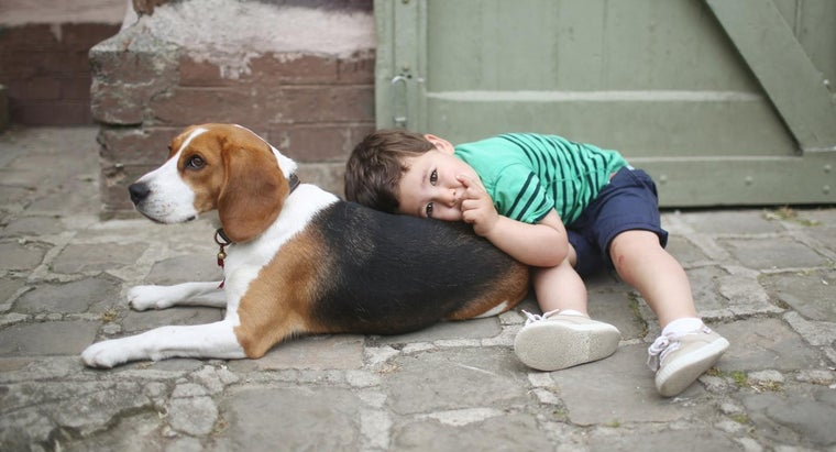 affectionate-dogs