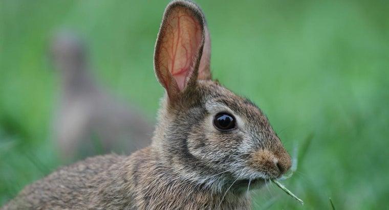 animal-eats-rabbits