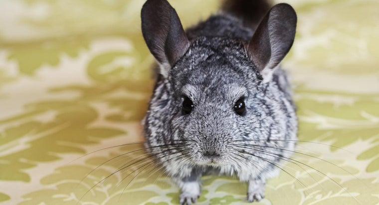 animal-softest-fur