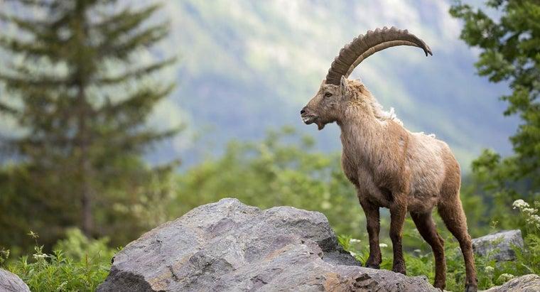 animals-live-germany