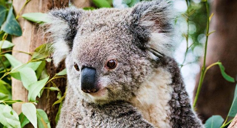 animals-live-trees
