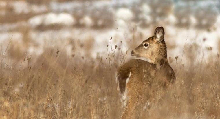 animals-native-ohio