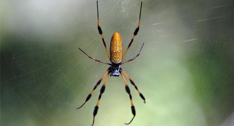 banana-spiders-poisonous