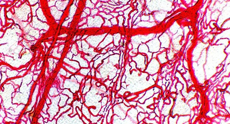 arteries-thicker-walls-veins