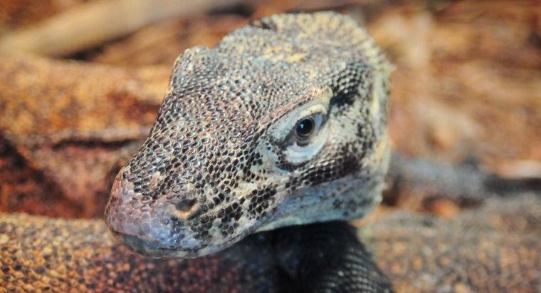 baby-komodo-dragon-called