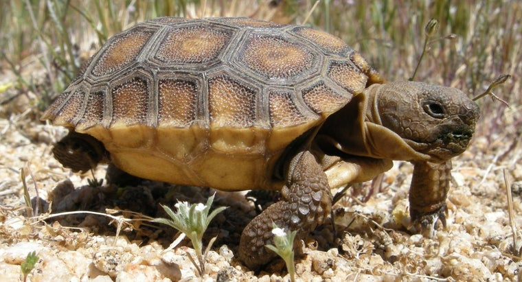 baby-tortoise-called
