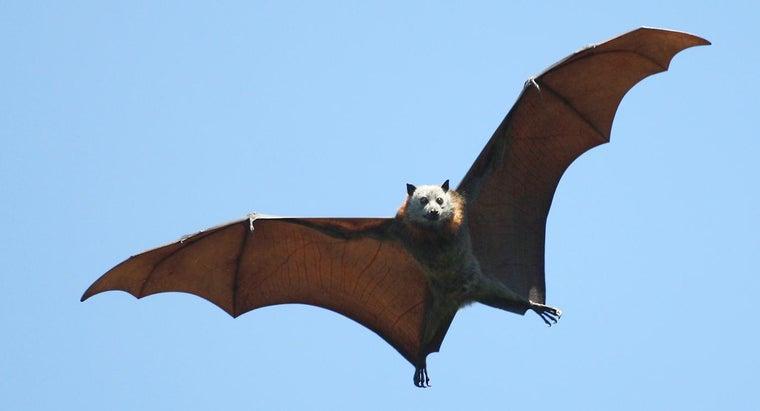 bat-marsupial