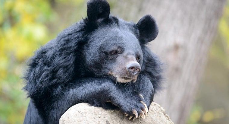 bears-tails