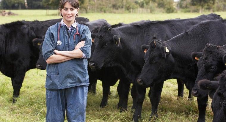 benefits-being-veterinarian