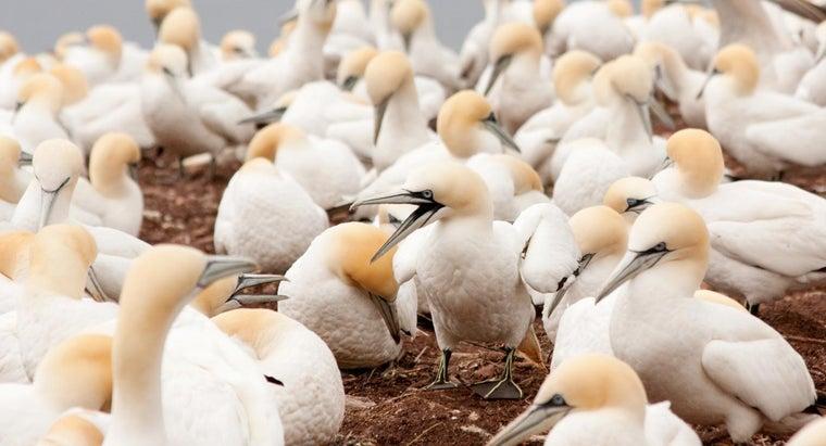 bird-sanctuary