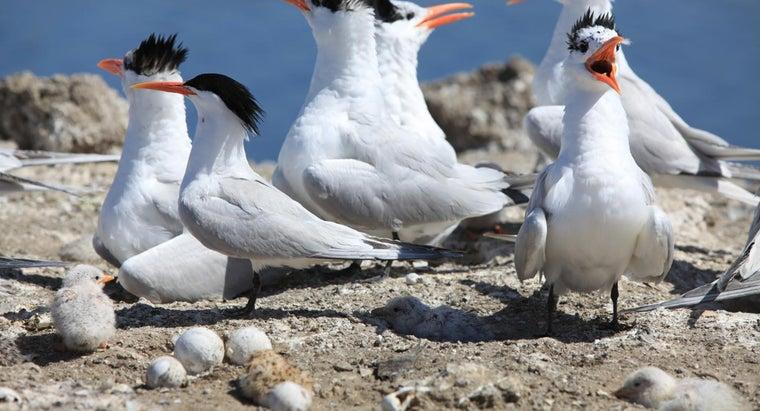 birds-mate