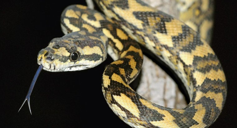 black-snake-yellow-diamonds