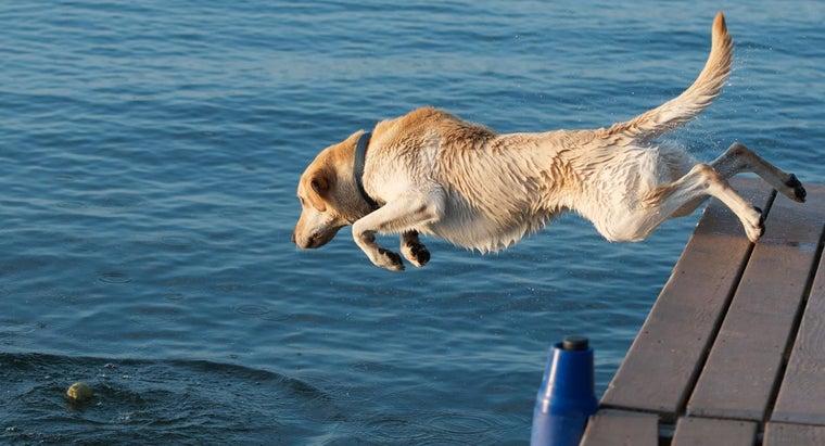 breeds-dogs-webbed-feet