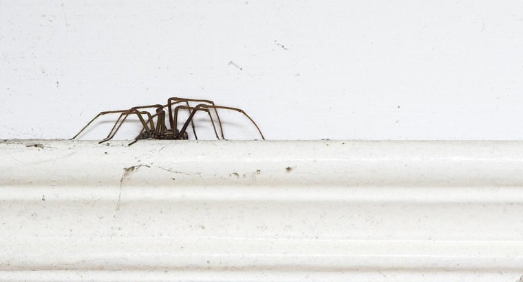 bugs-commonly-found-house