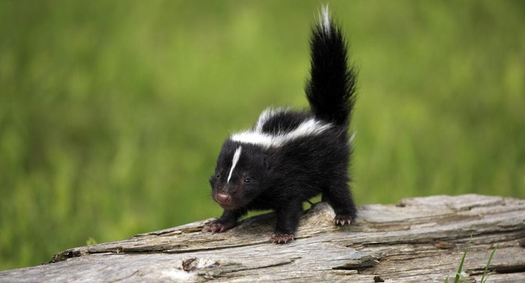 can-baby-skunks-spray