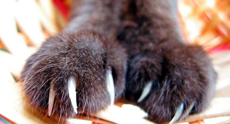 can-rabies-cat-scratch