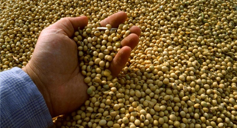 safe-eat-raw-soybeans