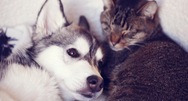 cats-smarter-dogs