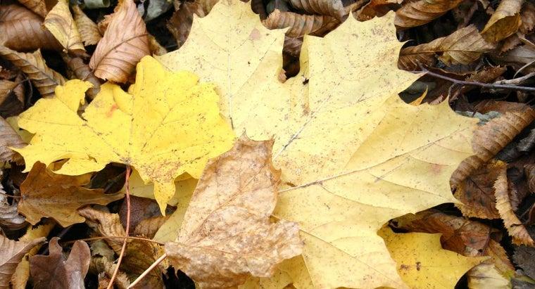 color-brown-yellow-make