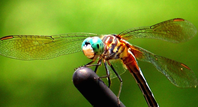 color-dragonfly