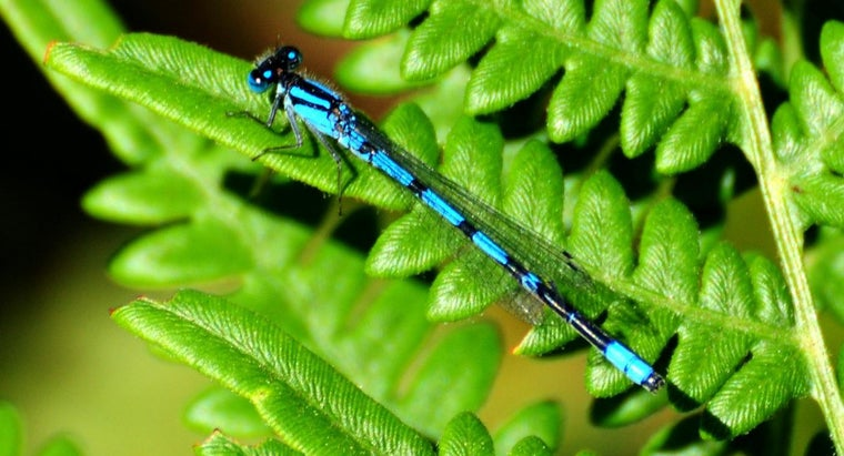 color-mix-blue-green