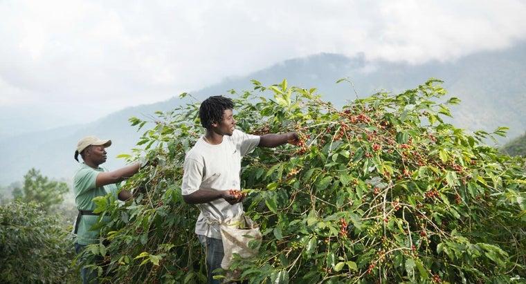 crops-grown-jamaica