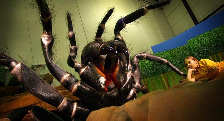 deadliest-spider