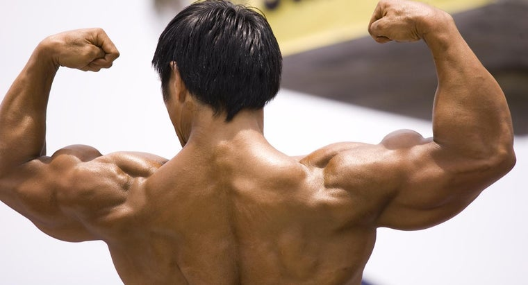 definition-muscular-fitness