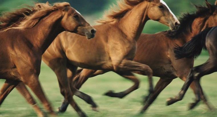 did-horses-arrive-north-america