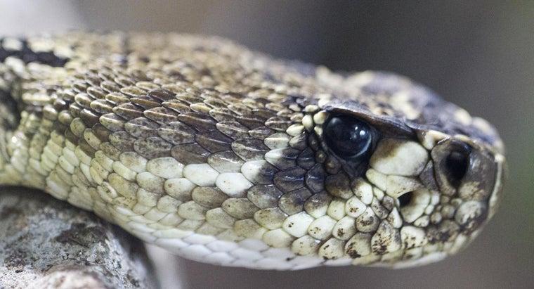 difference-between-cobra-vs-rattlesnake
