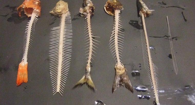 difference-between-human-animal-bones