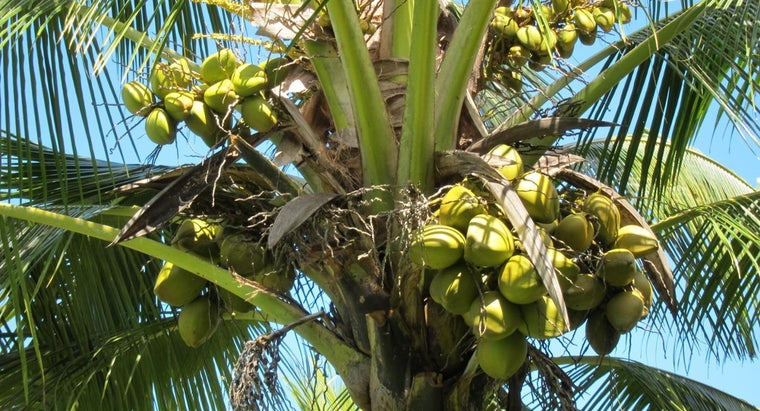 different-types-coconuts