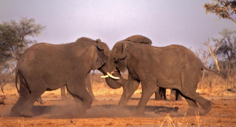 elephants-protect-themselves