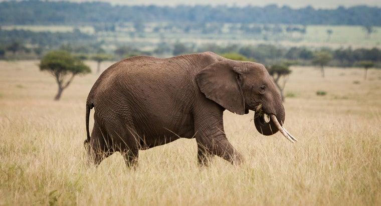 enemy-african-elephant