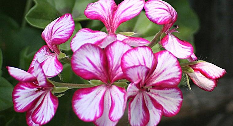 examples-ornamental-plants
