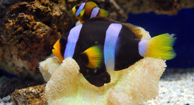 female-fish-called