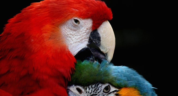 female-parrot-called