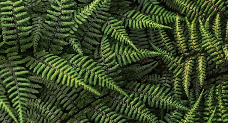 ferns-reproduce