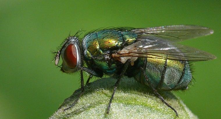 flies-live-during-winter