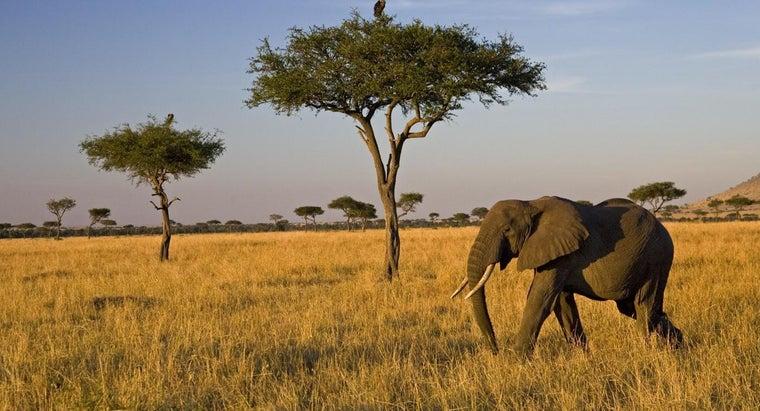 food-chain-savanna