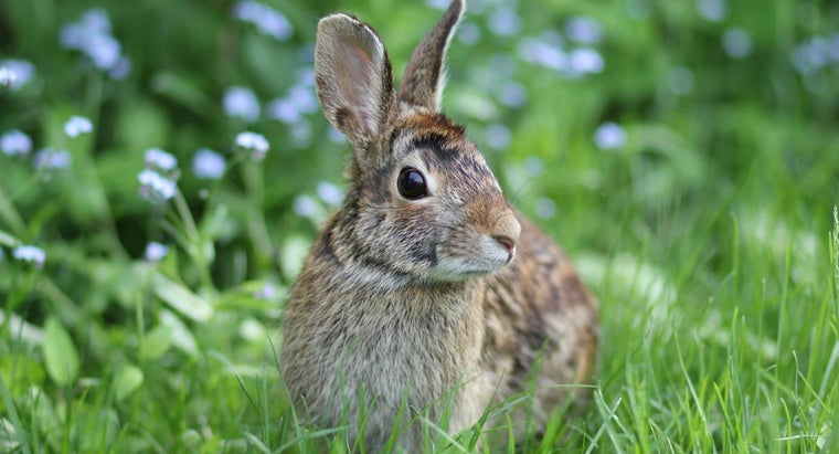 foods-provide-nutrients-wild-rabbits