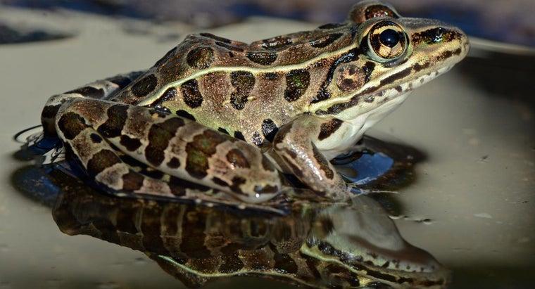frog-herbivore