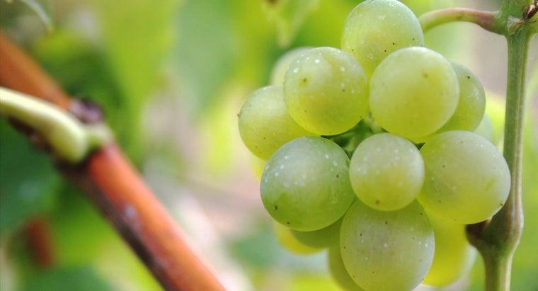 fruits-grow-vines