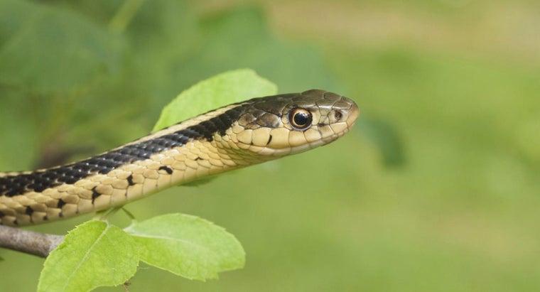 garter-snake-look-like